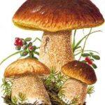 CENTRI MICOLOGICI – controllo funghi - sedi ed orari